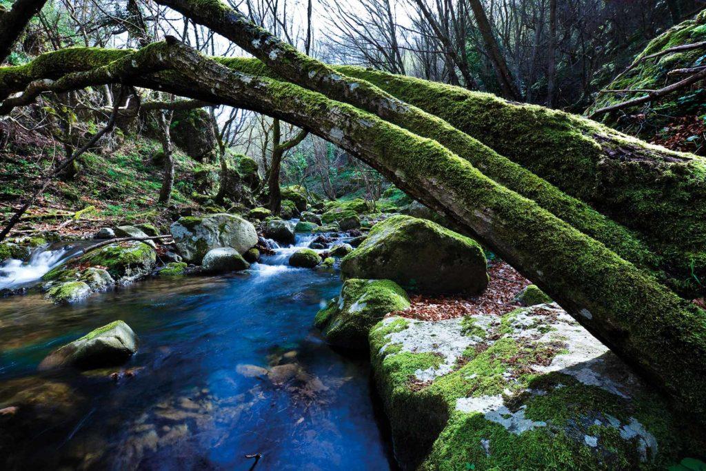 fotografia di paesaggio, bosco fiume, muschio e acqua in movimento