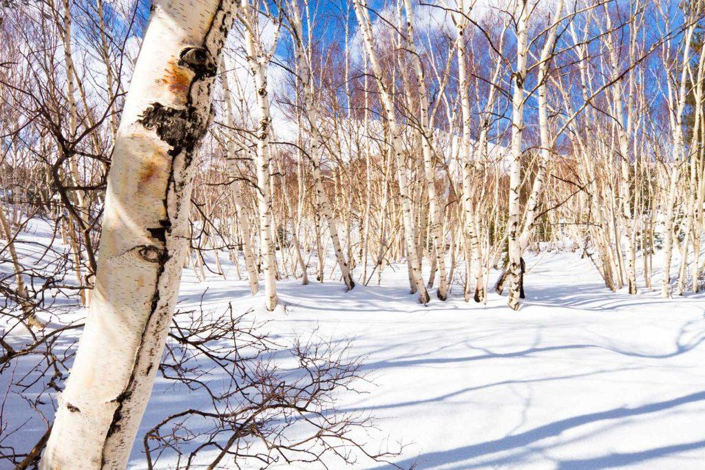 fotografia di paesaggio, terra, neve, alberi e cielo blu