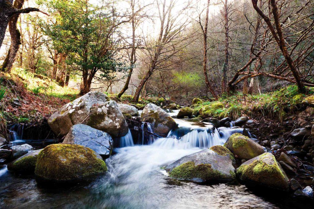 fotografia di paesaggio, fiume, alberi e acqua in movimento