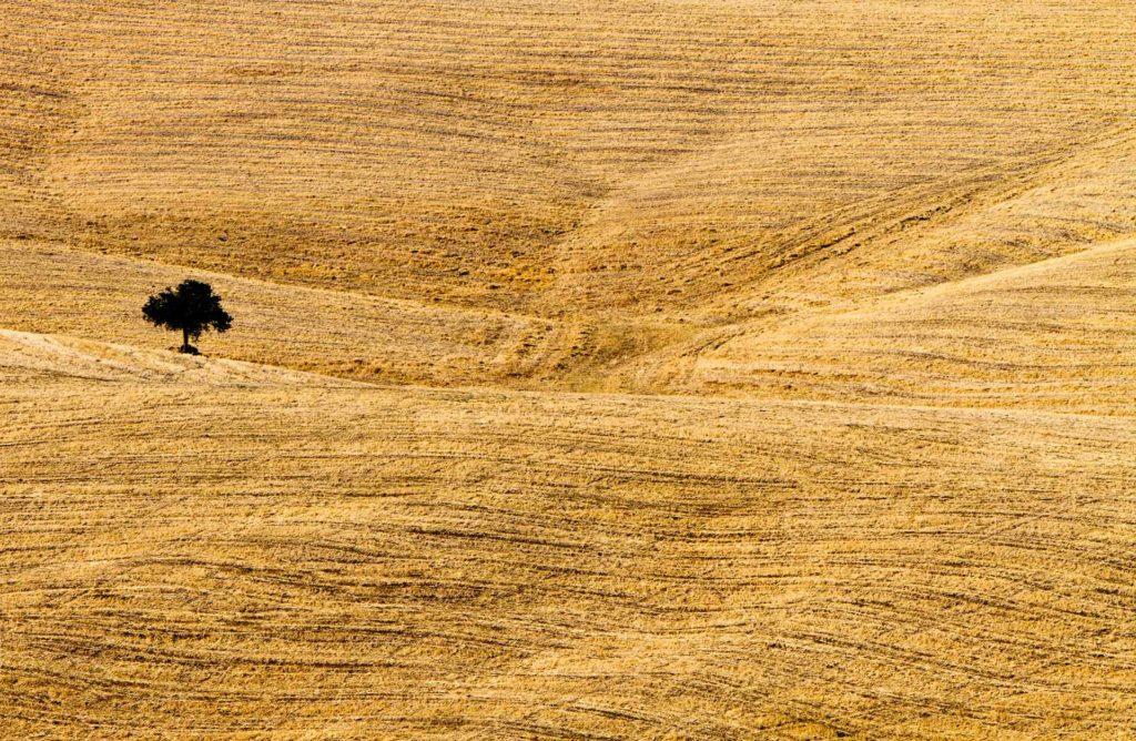 fotografia di paesaggio, terra, albero e grano giallo