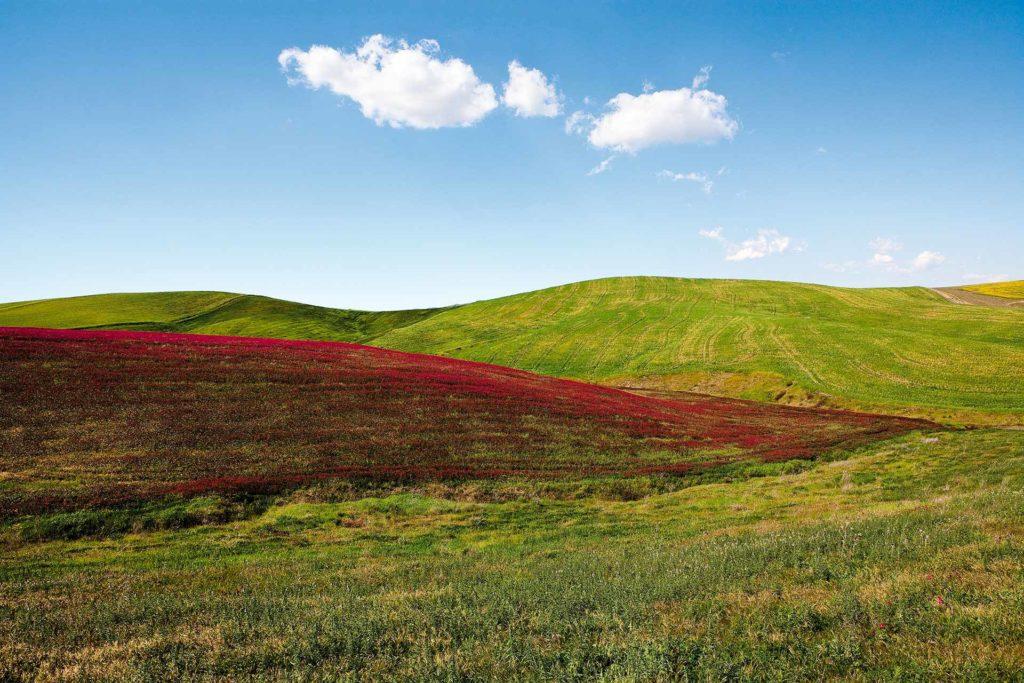 fotografia di paesaggio, fiori, terra, campagna e cielo blu