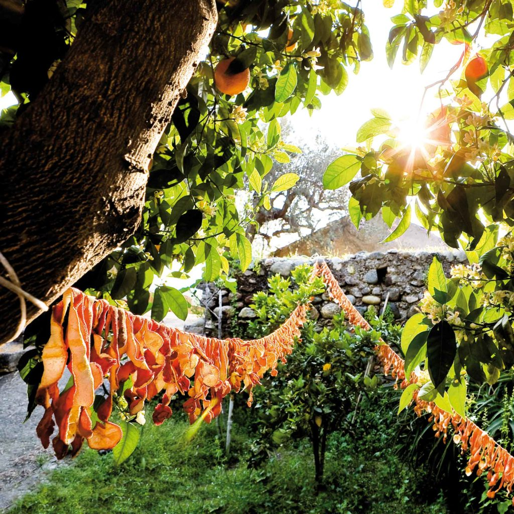 gli agrumi sono utilizzati neel'agricoltura italiana in molte regioni ed anche la scorza puo essere resa produttiva