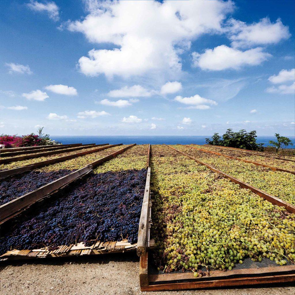 la produzione di uva è tra i principali indotti dell'agricoltura italiana