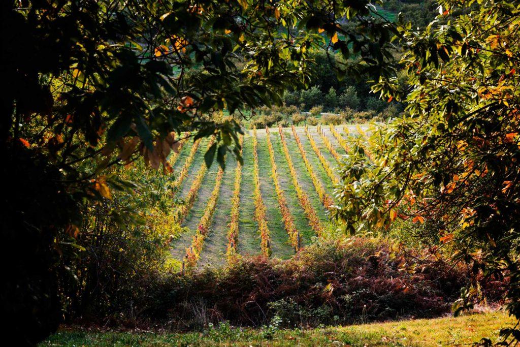 i vitigni fanno parte delle culture dell'agricoltura italiana