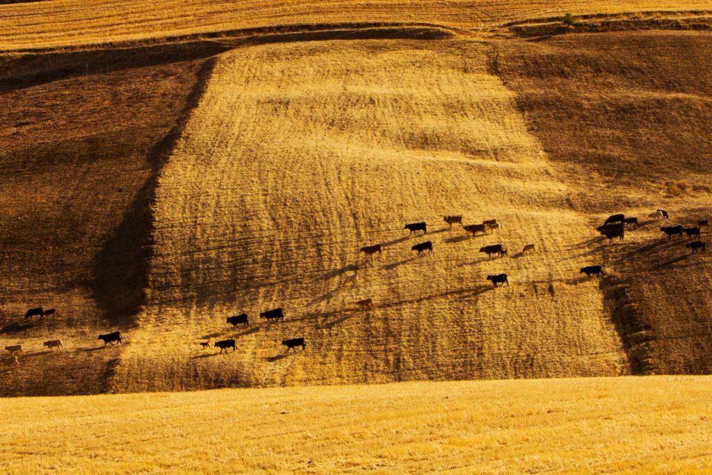 il grano è una delle risorse primarie della agricoltura italiana